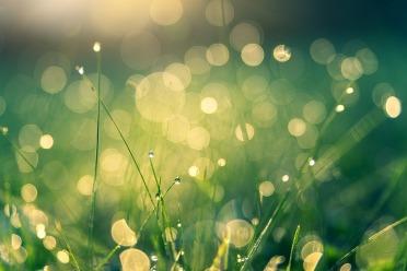 meadow-4485609_960_720